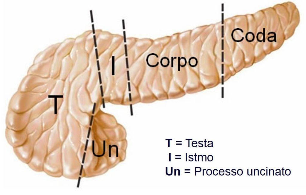 Pancreas diviso in 5 parti